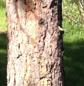 Look closely. Little green hummingbird walking with me.