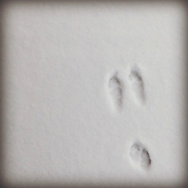 bunnyprintsinsnow
