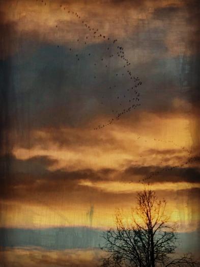 Winter Geese.jpg
