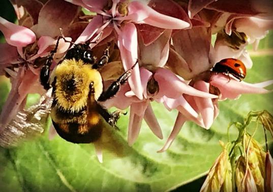 Bee and Ladybug